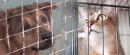 Animal Shelters Face Funding Challenge