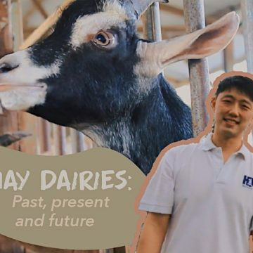 Hay Dairies Goat Farm