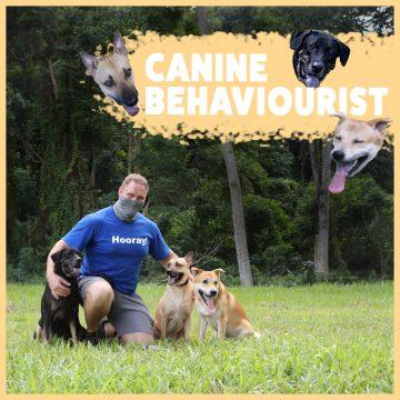 canine behaviourist